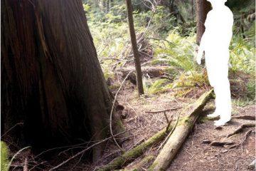 Karl Blau – Nature's Got Away